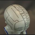 Porcelanowa głowa lekarska mapa mózgu House