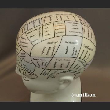 Głowa lekarska frenologia jak u doktora House